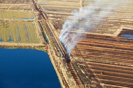 Luftaufnahme Moor