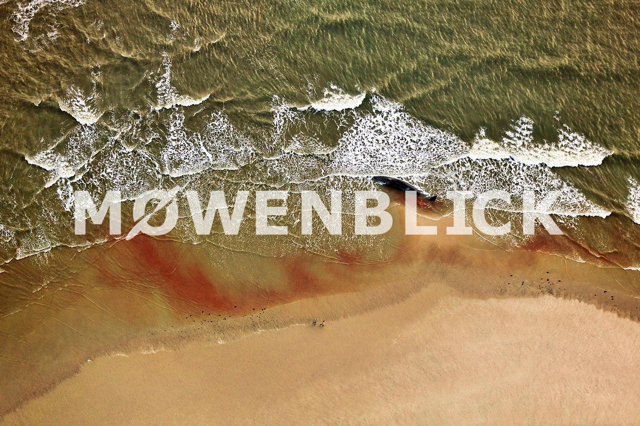Pottwale auf Wangerooge Luftbild