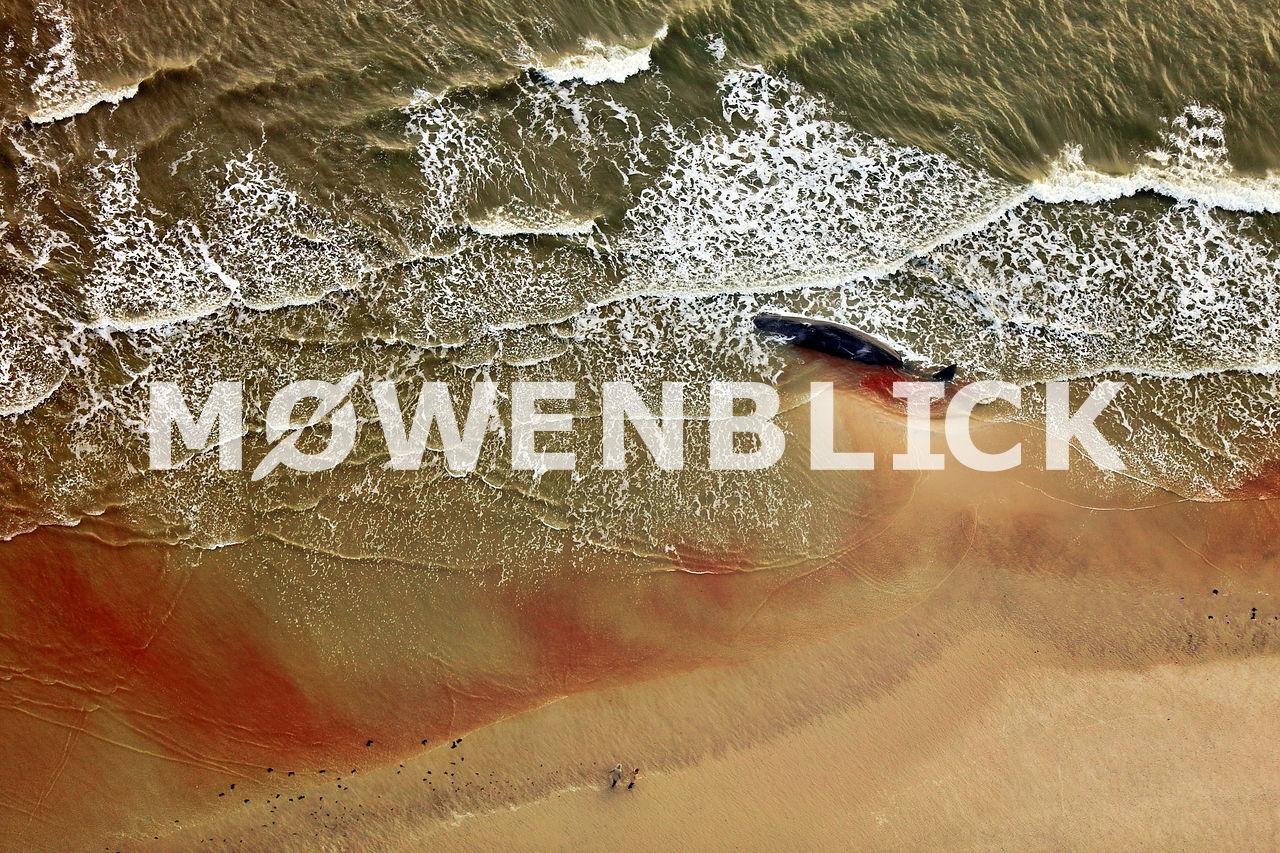Gestrandeter Wal Nordseeküste Luftbild
